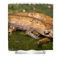 Bolitoglossine Salamander Shower Curtain by Dante Fenolio