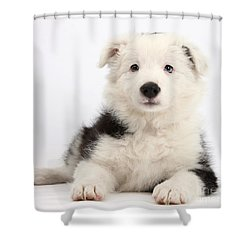 Border Collie Female Puppy Shower Curtain by Mark Taylor