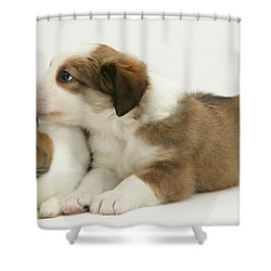 Border Collie Pup With Dutch Rabbit Shower Curtain by Jane Burton