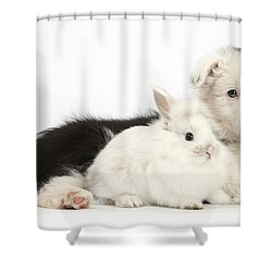 Border Collie Puppy With Baby Rabbit Shower Curtain by Mark Taylor