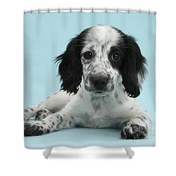 Border Collie X Cocker Spaniel Puppy Shower Curtain by Mark Taylor