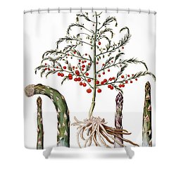 Botany: Asparagus, 1613 Shower Curtain by Granger
