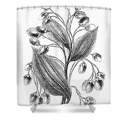 Botany: Cinnamon Plant Shower Curtain by Granger
