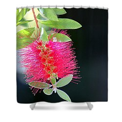 Bottlebrush Nectar Shower Curtain