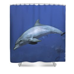 Bottlenose Dolphin Shower Curtain by Tom Peled