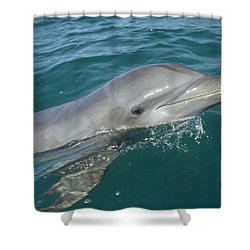 Bottlenose Dolphin Tursiops Truncatus Shower Curtain by Konrad Wothe