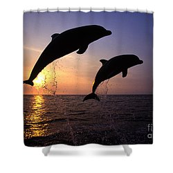 Bottlenose Dolphins Shower Curtain