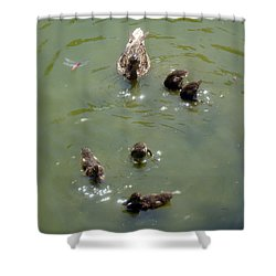 Bottom's Up Shower Curtain by David G Paul