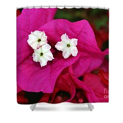 Bouganvillea Shower Curtain by Sabrina L Ryan