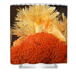 Bowerbanks Halichondria & Spiral-tufted Shower Curtain by Ted Kinsman