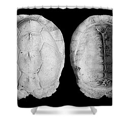 Box Turtle Shell Shower Curtain by Frederic A Reinecke