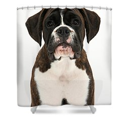Boxer Pup Shower Curtain by Mark Taylor