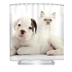Boxer Puppy And Blue-point Kitten Shower Curtain by Mark Taylor