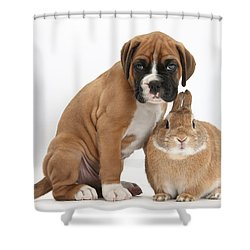 Boxer Puppy And Netherland-cross Rabbit Shower Curtain by Mark Taylor