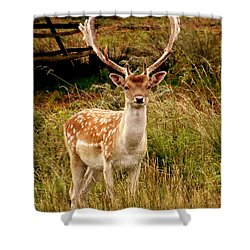 Wildlife Fallow Deer Stag Shower Curtain by Linsey Williams