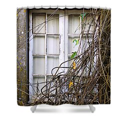 Branchy Window Shower Curtain by Carlos Caetano