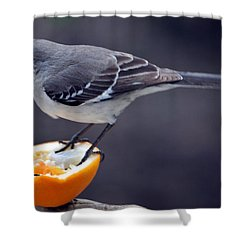 Breakfast Shower Curtain by Skip Willits