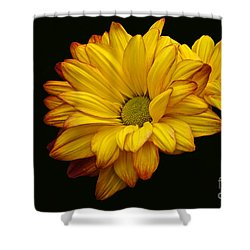 Bright And Brassy Shower Curtain