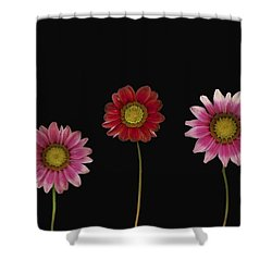 Bright Colorful Daisies Shower Curtain by Deddeda