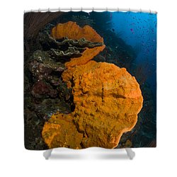 Bright Orange Sponge With Sunburst Shower Curtain by Steve Jones