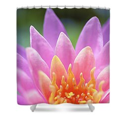 Bright Pink Water Lily Shower Curtain by Kicka Witte