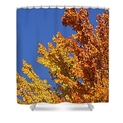 Brilliant Fall Color And Deep Blue Sky Shower Curtain by Mick Anderson