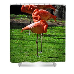 Brilliant Flamingos Shower Curtain by Mary Machare