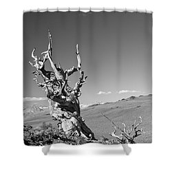 Bristlecone Pine And Cloud Shower Curtain