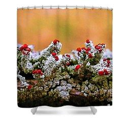 British Soldier Lichen Shower Curtain by Judi Bagwell