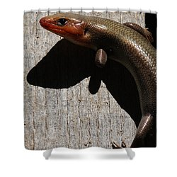 Broad-headed Skink On Barn  Shower Curtain