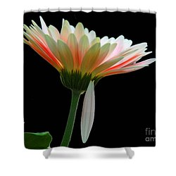 Shower Curtain featuring the photograph Broken Daisy by Cindy Manero