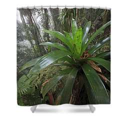 Bromeliad And Tree Ferns Colombia Shower Curtain by Cyril Ruoso