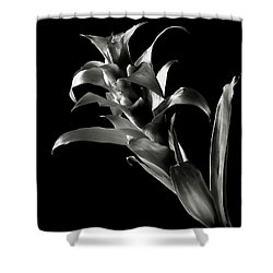 Shower Curtain featuring the photograph Bromeliad In Black And White by Endre Balogh