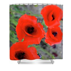 Brothers Of Red Shower Curtain by Empty Wall