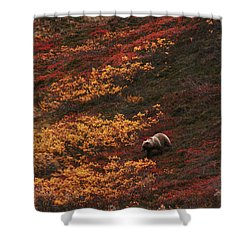 Brown Bear Denali National Park Shower Curtain