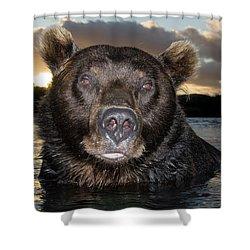 Brown Bear Ursus Arctos In River Shower Curtain by Sergey Gorshkov