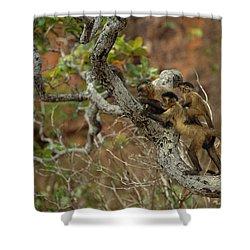 Brown Capuchin Cebus Apella Three Shower Curtain by Pete Oxford