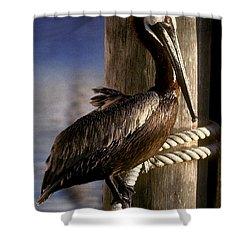 Brown Pelican In Key West 9l Shower Curtain by Gerry Gantt