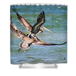 Brown Pelicans Taking Flight Shower Curtain