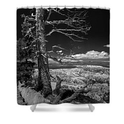 Bryce Canyon - Dead Tree Black And White Shower Curtain