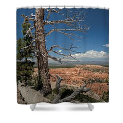 Bryce Canyon - Dead Tree Shower Curtain