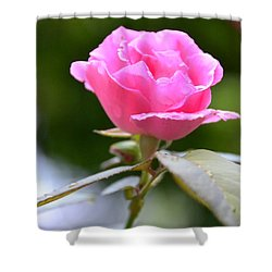 Bubblegum Rose Shower Curtain