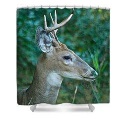 Buck Profile 9634 Shower Curtain by Michael Peychich