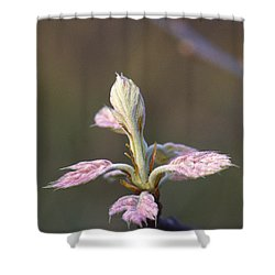 Budding Oak Leaves Shower Curtain