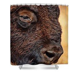 Buffalo Up Close Shower Curtain by Alan Hutchins
