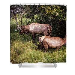Bull Elk 7x7 Shower Curtain