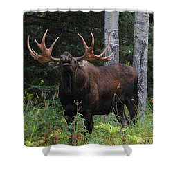 Shower Curtain featuring the photograph Bull Moose Flehmen by Doug Lloyd