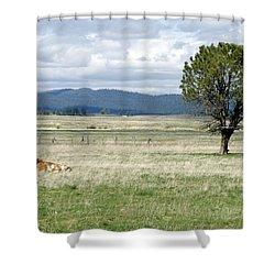 Bull Shower Curtain by Sara Stevenson