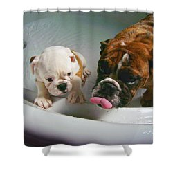 Shower Curtain featuring the photograph Bulldog Bath Time II by Jeanette C Landstrom