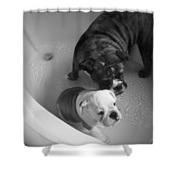 Shower Curtain featuring the photograph Bulldog Bath Time by Jeanette C Landstrom